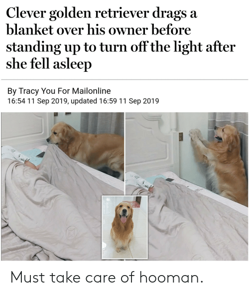 retriever: Clever golden retriever drags a  blanket over his owner before  standing up to turn off the light after  she fell asleep  By Tracy You For Mailonline  16:54 11 Sep 2019, updated 16:59 11 Sep 2019 Must take care of hooman.
