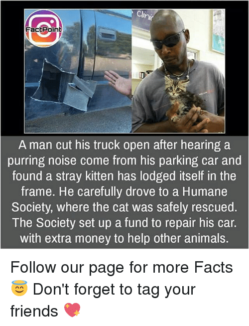 Animals, Facts, and Friends: Clinn  FactPoint  A man cut his truck open after hearing a  purring noise come from his parking car and  found a stray kitten has lodged itself in the  frame. He carefully drove to a Humane  Society, where the cat was safely rescued.  The Society set up a fund to repair his car.  with extra money to help other animals. Follow our page for more Facts 😇 Don't forget to tag your friends 💖
