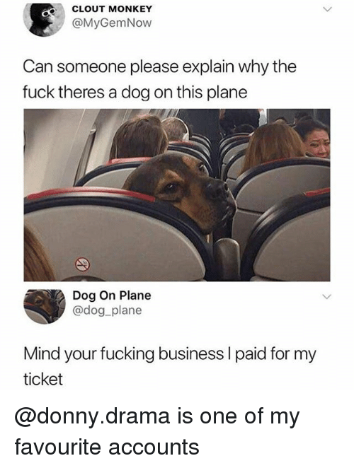 Fucking, Memes, and Business: CLOUT MONKEY  @MyGemNow  Can someone please explain why the  fuck theres a dog on this plane  Dog On Plane  @dog plane  Mind your fucking business I paid for my  ticket @donny.drama is one of my favourite accounts