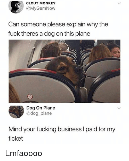 Fucking, Funny, and Business: CLOUT MONKEY  @MyGemNow  Can someone please explain why the  fuck theres a dog on this plane  Dog On Plane  @dog plane  Mind your fucking business l paid for my  ticket Lmfaoooo