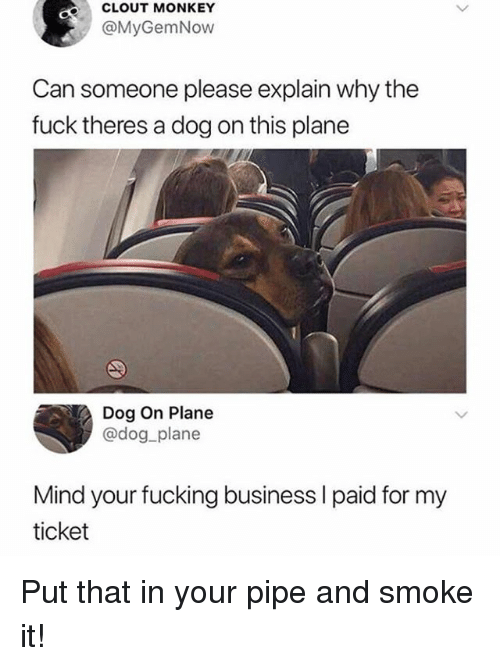 Fucking, Funny, and Business: CLOUT MONKEY  @MyGemNow  Can someone please explain why the  fuck theres a dog on this plane  Dog On Plane  @dog_plane  Mind your fucking business l paid for my  ticket Put that in your pipe and smoke it!