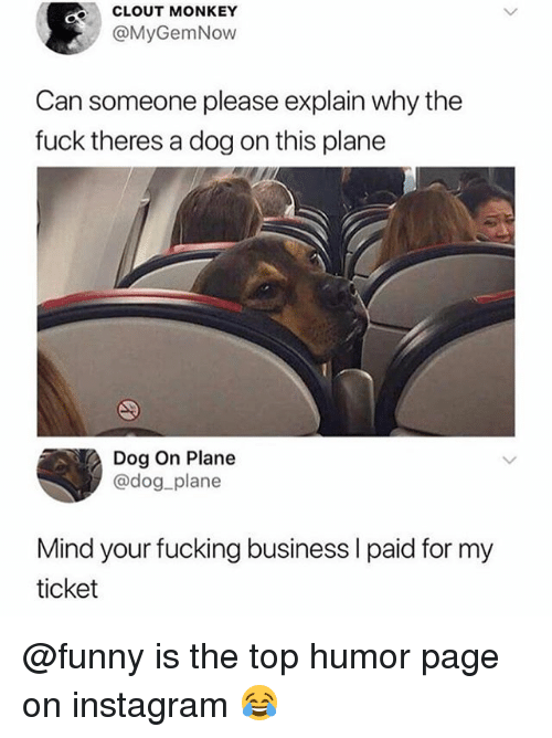 Fucking, Funny, and Instagram: CLOUT MONKEY  @MyGemNow  Can someone please explain why the  fuck theres a dog on this plane  Dog On Plane  @dog plane  Mind your fucking business I paid for my  ticket @funny is the top humor page on instagram 😂