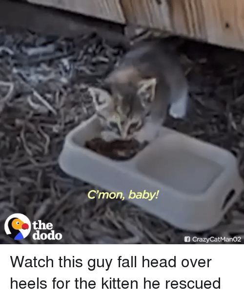 Fall, Head, and Watch: C'mon, baby!  the  dodo  f CrazyCatMan02 Watch this guy fall head over heels for the kitten he rescued