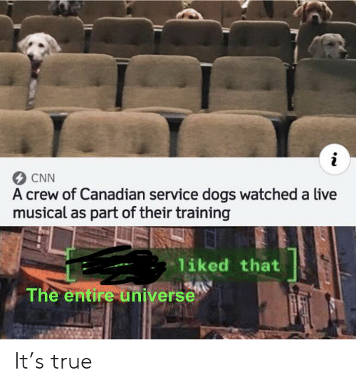 musical: CNN  A crew of Canadian service dogs watched a live  musical as part of their training  liked that  The entire universe It's true