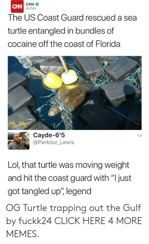 """trapping: CNN  CN  @CNN  The US Coast Guard rescued a sea  turtle entangled in bundles of  cocaine off the coast of Florida  Cayde-6'5  @Parkour_Lewis  Lol, that turtle was moving weight  and hit the coast guard with """"  just  got tangled up"""", legend OG Turtle trapping out the Gulf by fuckk24 CLICK HERE 4 MORE MEMES."""