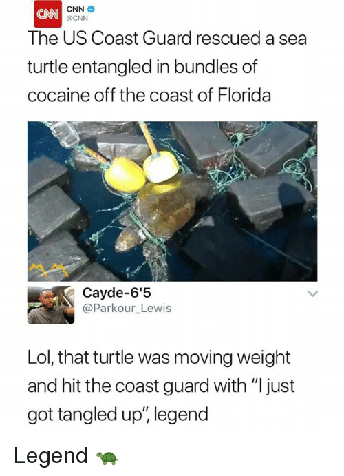 "cnn.com, Lol, and Cocaine: CNN  @CNN  CNN  The US Coast Guard rescued a sea  turtle entangled in bundles of  cocaine off the coast of Florida  Cayde-6'5  @Parkour_Lewis  Lol, that turtle was moving weight  and hit the coast guard with ""Ijust  got tangled up"", legend Legend 🐢"