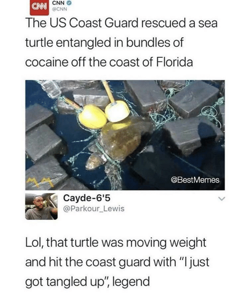 """Coast Guard: CNN  @CNN  The US Coast Guard rescued a sea  turtle entangled in bundles of  cocaine off the coast of Florida  @BestMemes  Cayde-6'5  @Parkour_Lewis  Lol, that turtle was moving weight  and hit the coast guard with """"just  got tangled up', legend"""