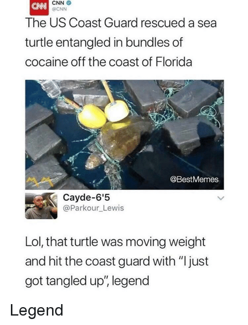 """Coast Guard: CNN  @CNN  The US Coast Guard rescued a sea  turtle entangled in bundles of  cocaine off the coast of Florida  @BestMemes  Cayde-6'5  @Parkour_Lewis  Lol, that turtle was moving weight  and hit the coast guard with """"just  got tangled up', legend Legend"""