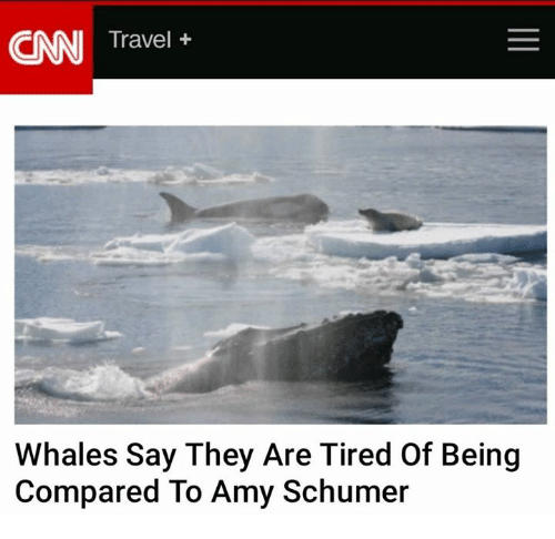 Amy Schumer, cnn.com, and Memes: CNN Travel  Whales Say They Are Tired of Being  Compared To Amy Schumer