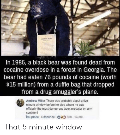 ore: COCANE BEA  In 1985, a black bear was found dead from  cocaine overdose in a forest in Georgia. The  bear had eaten 76 pounds of cocaine (worth  $15 million) froma duffle bag that dropped  from a drug smuggler's plane.  Andrew Miller There was probably about a five  minute window before he died where he was  officially the most dangerous apex predator on any  continent  Imi place Ráspunde O4660 14 ore That 5 minute window