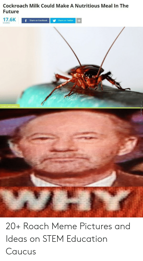 Roach Meme: Cockroach Milk Could Make A Nutritious Meal In The  Future  17.6K  f Share on Facebook  Share on Twitter  SHARES  LANTS AND ANIMALS  WHY 20+ Roach Meme Pictures and Ideas on STEM Education Caucus