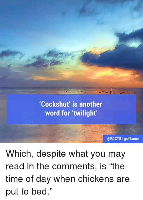 """twilights: """"Cockshut' is another  word for twilight  @FACTS l guff.com Which, despite what you may read in the comments, is """"the time of day when chickens are put to bed."""""""
