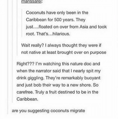 The Narrator: Coconuts have only been in the  Caribbean for 500 years. They  just....floated on over from Asia and toolk  root. That's...hilarious.  Wait really? I always thought they were if  not native at least brought over on purpose  Right??? l'm watching this nature doc and  when the narrator said that I nearly spit my  drink giggling. They're remarkably buoyant  and just bob their way to a new shore. So  carefree. Truly a fruit destined to be in the  Caribbean  are you suggesting coconuts migrate