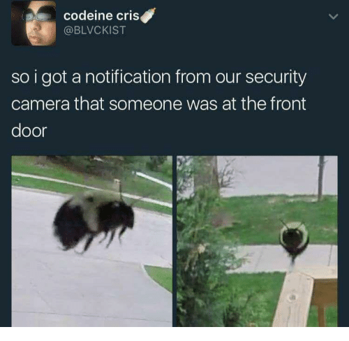 security camera: codeine criS  @BLVCKIST  so i got a notification from our security  camera that someone was at the front  door