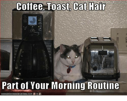 Memes, Coffee, and Hair: Coffee, Toast Cat Hair  Part of Your Morning Routine