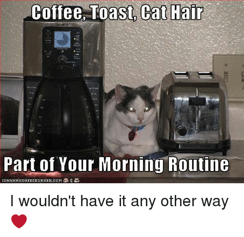 Memes, Coffee, and Hair: Coffee Toast, Cat Hair  Part of Your Morning Routine I wouldn't have it any other way ❤️