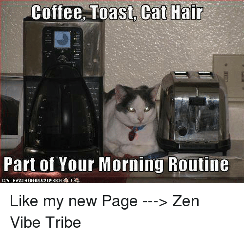 Toast Cat: Coffee, Toast, Cat Hair  Part of Your Morning Routine Like my new Page ---> Zen Vibe Tribe