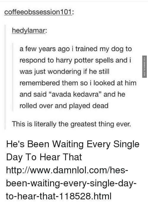 """damnlol: coffeeobssession 101:  hedylamar:  a few years ago i trained my dog to  respond to harry potter spells and i  was just wondering if he still  remembered them so i looked at him  and said """"avada kedavra"""" and he  rolled over and played dead  This is literally the greatest thing ever. He's Been Waiting Every Single Day To Hear That http://www.damnlol.com/hes-been-waiting-every-single-day-to-hear-that-118528.html"""