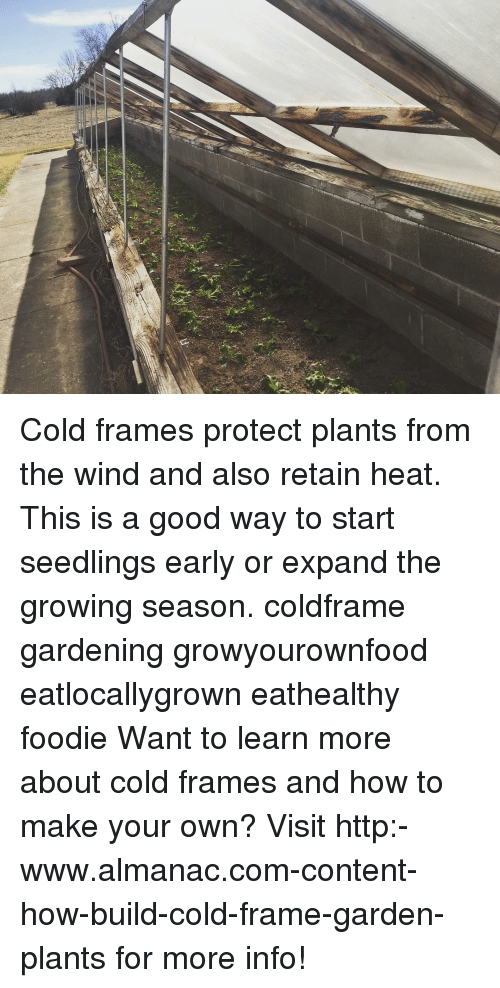 Cold Frames Protect Plants From the Wind and Also Retain Heat This ...