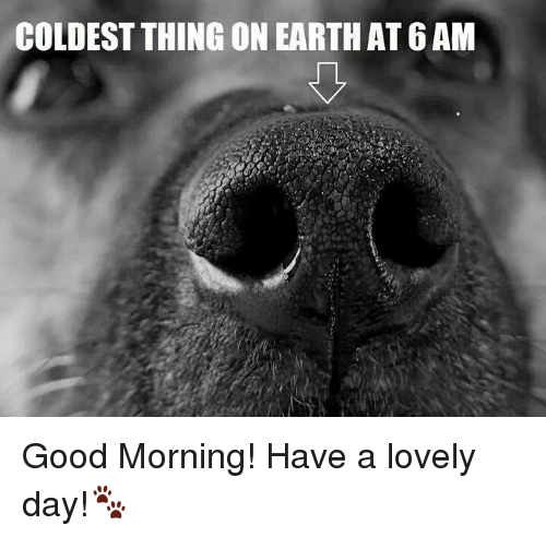 good mornings: COLDEST THING ON EARTH AT 6AM Good Morning!  Have a lovely day!🐾