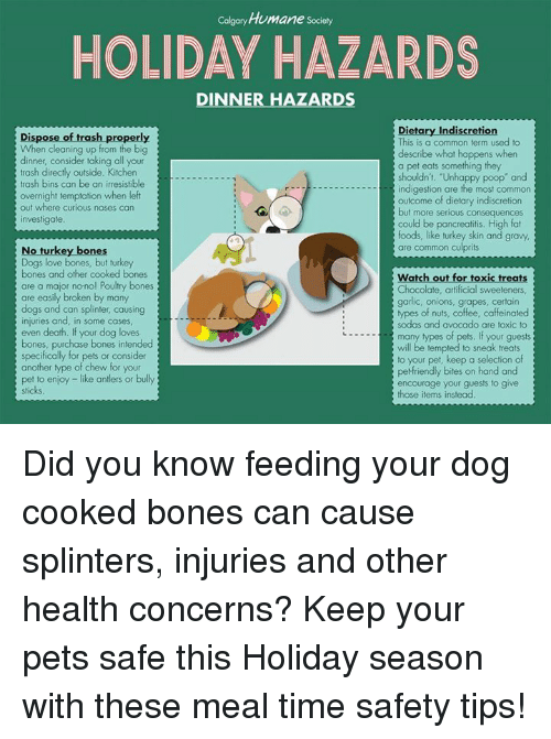 What To Watch For When Dog Turkey Bone Cooked