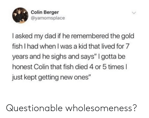 "Colin: Colin Berger  @yamomsplace  I asked my dad if he remembered the gold  fish I had when I was a kid that lived for 7  years and he sighs and says"" I gotta be  honest Colin that fish died 4 or 5 times l  just kept getting new ones"" Questionable wholesomeness?"