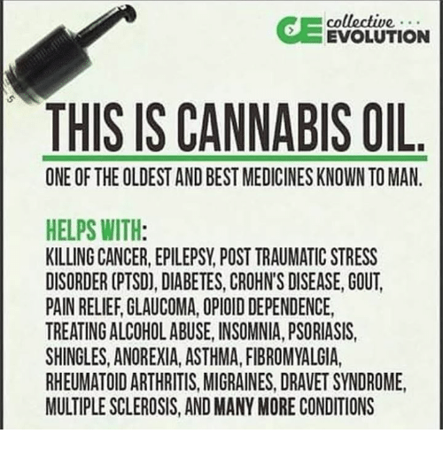 Cannabis: collective  EVOLUTION  THIS IS CANNABIS OIL  ONE OF THE OLDEST AND BESTMEDICINESKNOWN TO MAN.  HELPS WITH  KILLING CANCER, EPILEPSY POST TRAUMATIC STRESS  DISORDER (PTSD), DIABETES, CROHNS DISEASE, GOUT.  PAIN RELIEF GLAUCOMA, OPIOID DEPENDENCE,  TREATING ALCOHOLABUSE, INSOMNIA, PSORIASIS,  SHINGLES, ANOREXIA, ASTHMA, FIBROMYALGIA,  RHEUMATOID ARTHRITIS, MIGRAINES, DRAVET SYNDROME,  MULTIPLESCLEROSIS, AND MANY MORE CONDITIONS