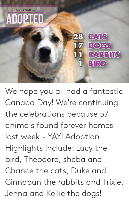 Animals, Cats, and Dogs: Colpary Humane sey  ADOPTED  28 CATS  17 DOGS  11 RABBITS  1 BIRD We hope you all had a fantastic Canada Day! We're continuing the celebrations because 57 animals found forever homes last week - YAY!   Adoption Highlights Include: Lucy the bird, Theodore, sheba and Chance the cats, Duke and Cinnabun the rabbits and Trixie, Jenna and Kellie the dogs!