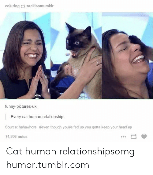 Gotta Keep: coluring E zackisontumblr  funny-pictures-uk:  Every cat human relationship.  Source: hahawhore #even though you're fed up you gotta keep your head up  74,806 notes Cat human relationshipsomg-humor.tumblr.com