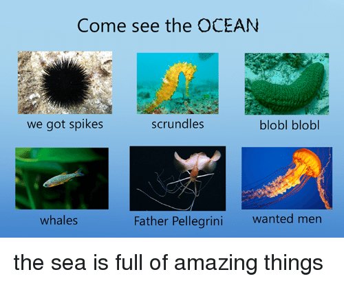 Pellegrini: Come see the OCEAN  scrundles  we got spikes  blobl blobl  Father Pellegrini wanted men  whales the sea is full of amazing things