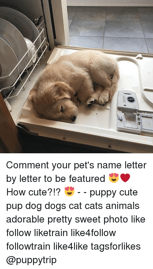 Cats, Memes, and Pup: Comment your pet's name letter by letter to be featured 😍❤ How cute?!? 😍 - - puppy cute pup dog dogs cat cats animals adorable pretty sweet photo like follow liketrain like4follow followtrain like4like tagsforlikes @puppytrip