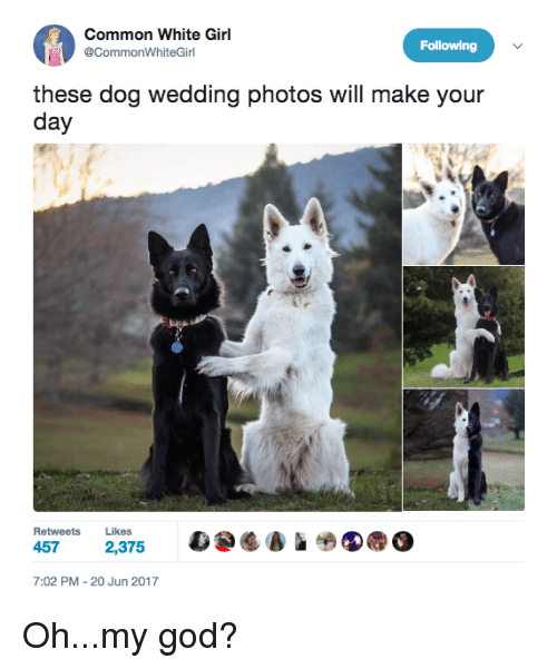 Best Memes About Wedding Photos Wedding Photos Memes - Funny dog wedding photos will make your day