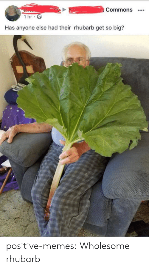 commons: Commons  1 hr  Has anyone else had their rhubarb get so big? positive-memes:  Wholesome rhubarb