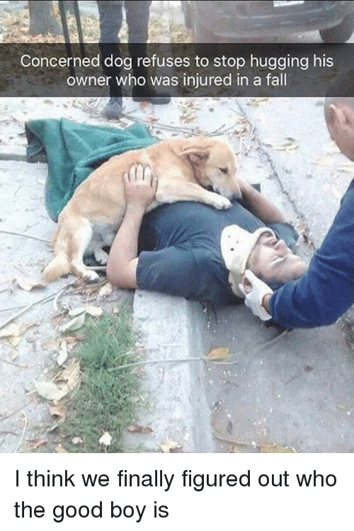 Fall, Good, and Boy: Concerned dog refuses to stop hugging his  owner who was injured in a fall I think we finally figured out who the good boy is