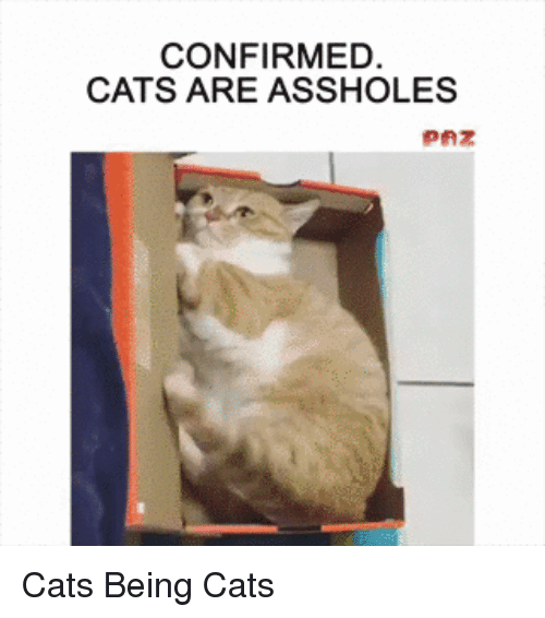 Cats Are Assholes: CONFIRMED  CATS ARE ASSHOLES Cats Being Cats