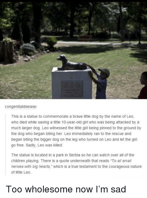 """Courageous: congenitaldisease  This is a statue to commemorate a brave little dog by the name of Leo,  who died while saving a little 10-year-old girl who was being attacked by a  much larger dog. Leo witnessed the little girl being pinned to the ground by  the dog who began biting her. Leo immediately ran to the rescue and  began biting the bigger dog on the leg who turned on Leo and let the girl  go free. Sadly, Leo was killed.  The statue is located in a park in Serbia so he can watch over all of the  children playing. There is a quote underneath that reads """"To all small  heroes with big hearts,"""" which is a true testament to the courageous nature  of little Leo. Too wholesome now I'm sad"""