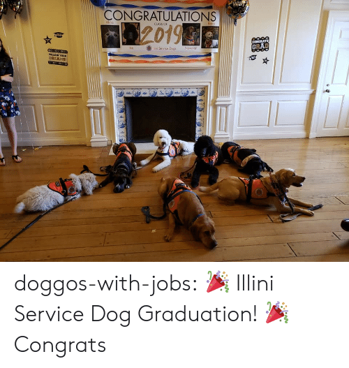 alma: CONGRATULATIONS  Alma  120196  CLASS OF  GRAD  ilin Service Dogs Newnia  DREAMS doggos-with-jobs:  🎉 Illini Service Dog Graduation! 🎉  Congrats