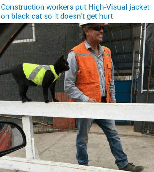 Construction: Construction workers put High-Visual jacket  on black cat so it doesn't get hurt