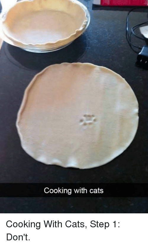 Cats, Memes, and 🤖: Cooking with cats Cooking With Cats, Step 1: Don't.
