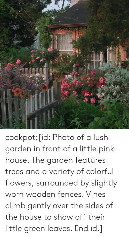 colorful: cookpot:[id: Photo of a lush garden in front of a little pink house. The garden features trees and a variety of colorful flowers, surrounded by slightly worn wooden fences. Vines climb gently over the sides of the house to show off their little green leaves. End id.]