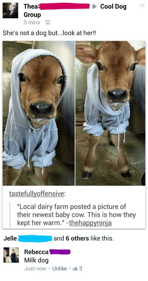 """Baby Cow: Cool Dog  Thea  Group  3 mins  She's not a dog but...look at her!!  tastefullyoffensive:  """"Local dairy farm posted a picture of  their newest baby cow. This is how they  kept her warm."""" -thehappyninja   Jelle  and 6 others like this.  Rebecca  Milk dog  Just now . Unlike . lẩm3"""