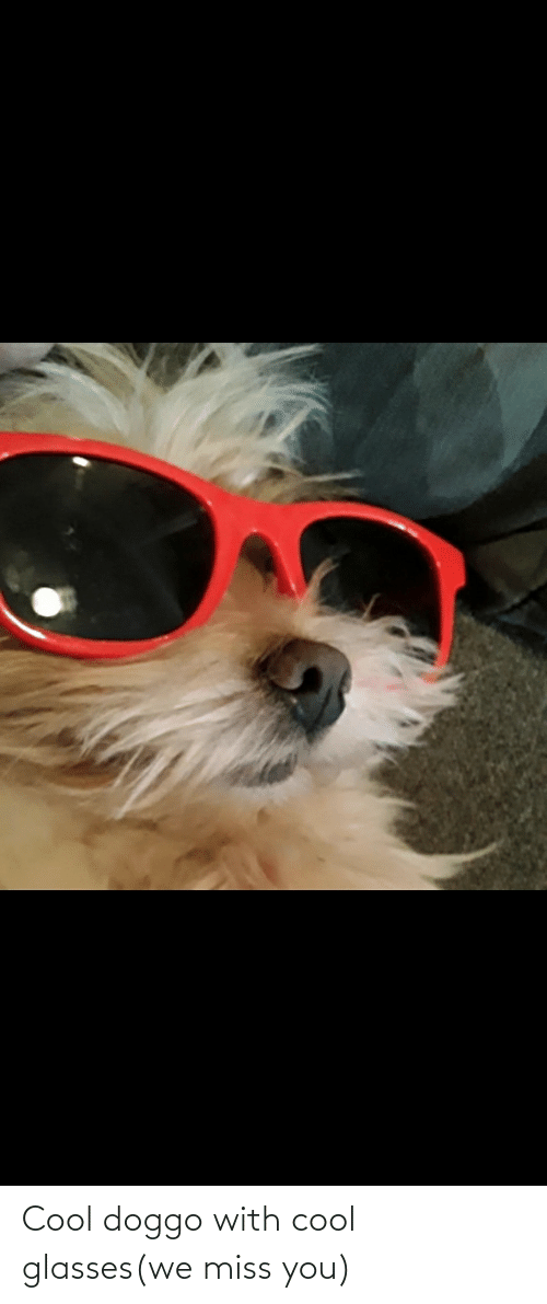 We Miss You: Cool doggo with cool glasses(we miss you)