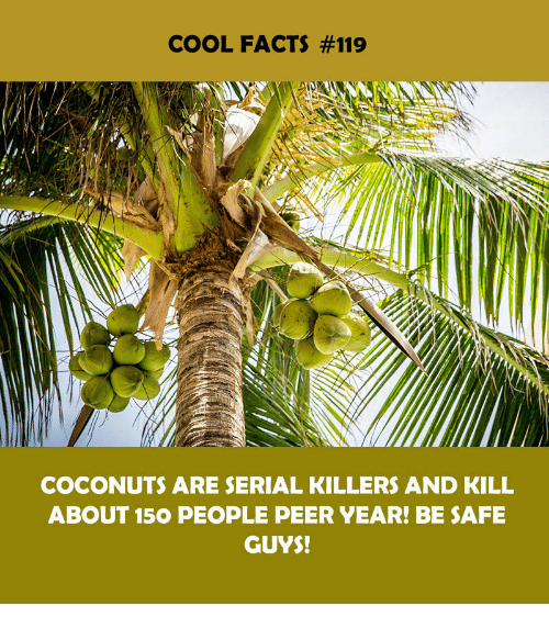 serial killers: COOL FACTS #119  COCONUTS ARE SERIAL KILLERS AND KILL  ABOUT 150 PEOPLE PEER YEAR! BE SAFE  GUYS!