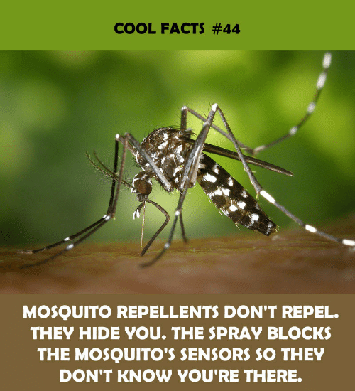hide: COOL FACTS #44  MOSQUITO REPELLENTS DON'T REPEL.  THEY HIDE YOU. THE SPRAY BLOCKS  THE MOSQUITO'S SENSORS SO THEY  DON'T KNOW YOU'RE THERE.