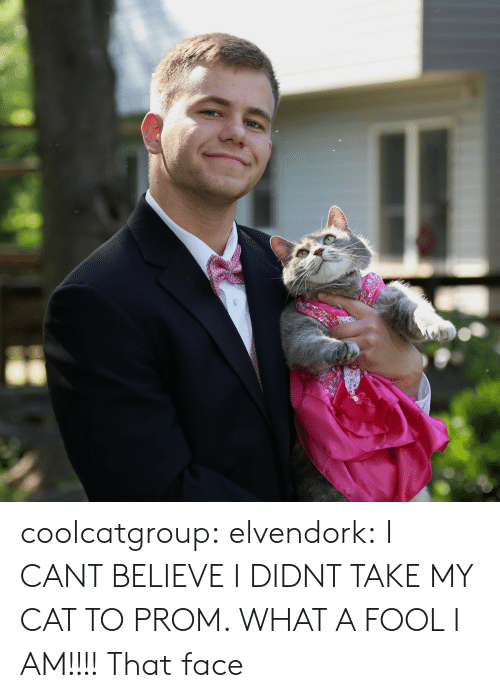 that face: coolcatgroup:  elvendork:  I CANT BELIEVE I DIDNT TAKE MY CAT TO PROM. WHAT A FOOL I AM!!!!   That face