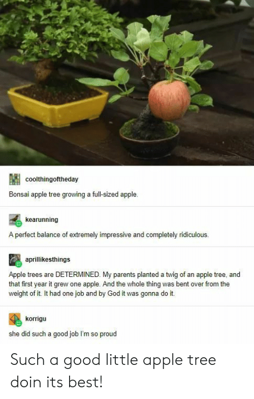 bent: coolthingoftheday  Bonsai apple tree growing a full-sized apple  kearunning  A perfect balance of extremely impressive and completely ridiculous  aprillikesthings  Apple trees are DETERMINED. My parents planted a twig of an apple tree, and  that first year it grew one apple. And the whole thing was bent over from the  weight of it. It had one job and by God it was gonna do it.  korrigu  she did such a good job I'm so proud Such a good little apple tree doin its best!