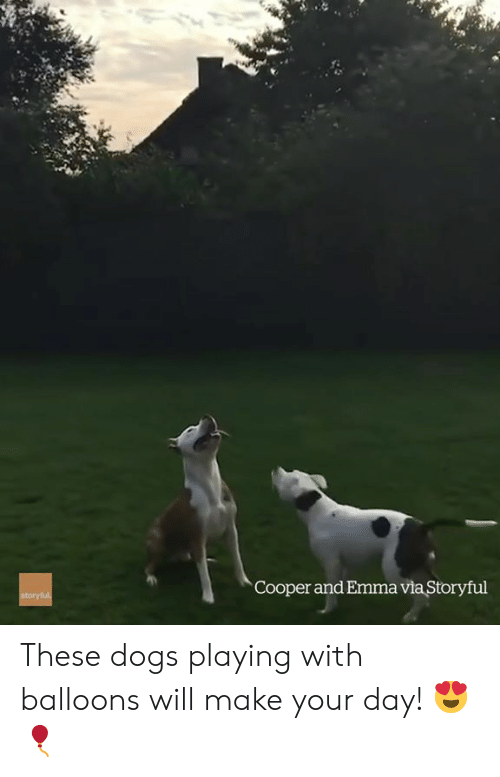 balloons: Cooper and Emma via Storyful These dogs playing with balloons will make your day! 😍🎈