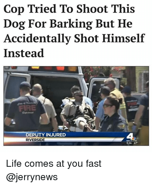 Fire, Funny, and Life: Cop Tried To Shoot This  Dog For Barking But He  Accidentally Shot Himself  Instead  FIRE  DEPUTY INJURED  RIVERSIDE  4  5:36 67 Life comes at you fast @jerrynews