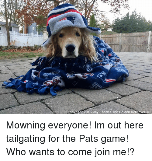 Memes, join.me, and Ray Charles: Copricht 2016 Ray Charles The Golden Retrever Mowning everyone! Im out here tailgating for the Pats game! Who wants to come join me!?