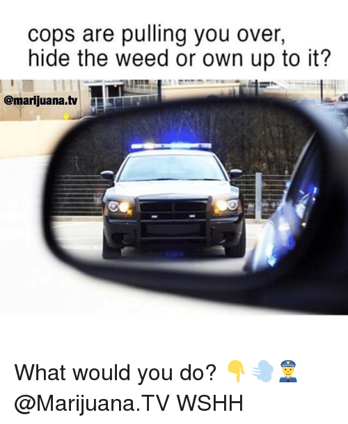 Memes, Weed, and Wshh: cops are pulling you over  hide the weed or own up to it?  @marijuana.tvT What would you do? 👇💨👮‍♂️ @Marijuana.TV WSHH